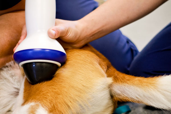 veterinarians performing the soundwave therapy on the dog