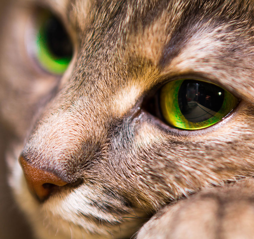 Portrait of a kind cat with big eyes close up