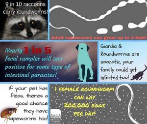 What's Hiding in Your Pets Feces- It's Giardia - Vet In Eden