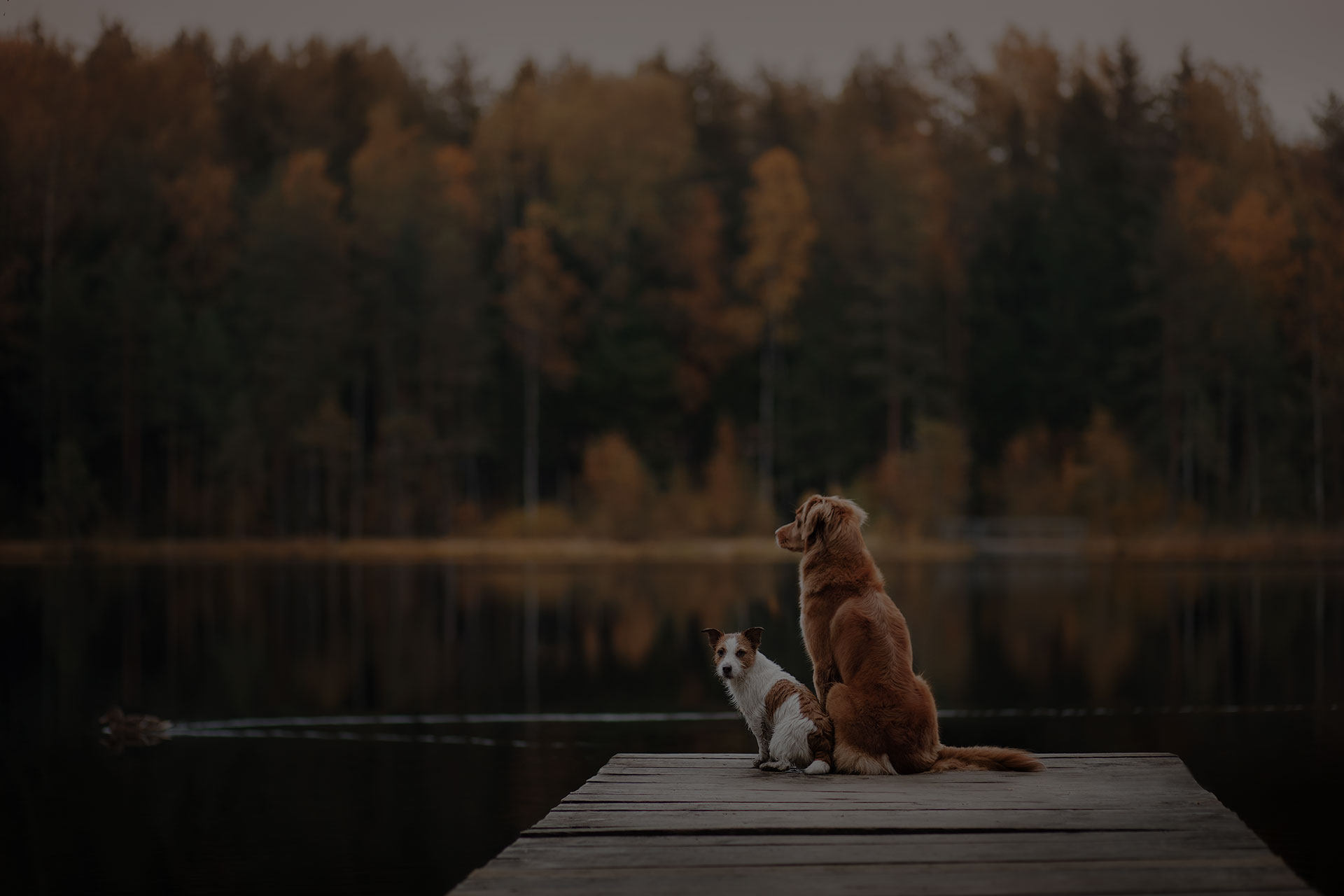 Adorable two dogs sitting on the dock near river